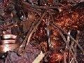 Куплю дорого лом МЕДИ, лом АЛЮМИНИЯ, лом ЛАТУНИ, ,  Киев 093-733-88-05