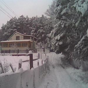 Дача в лесу под Киевом