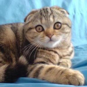 Кошечка необычайной красоты