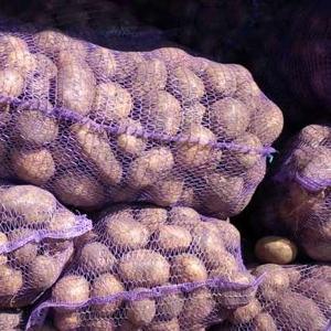 Картопля оптом від виробника