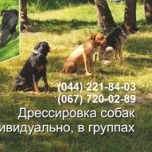 Дрессировка собак всех пород индивидуально и в группах