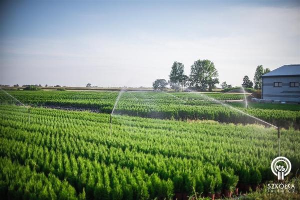 Декоративні рослини і трави високої якості оптом з розплідника 6