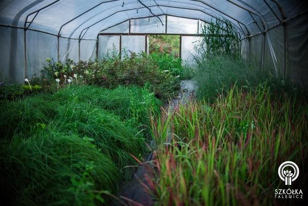 Декоративні рослини і трави високої якості оптом з розплідника 8