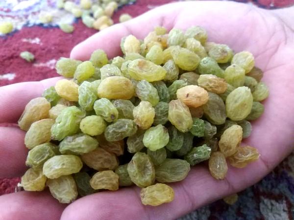 Экспортируем изюм из Афганистана. 2