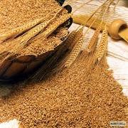 Отруби пшеничные пищевые