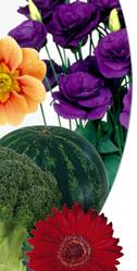 Семен цветов, овощей почтой