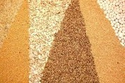 """ООО """"АГРОСОРТ"""" продаёт пшеницу 3-го класса от 500 тонн."""